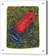 Strawberry Poison Dart Frog Acrylic Print