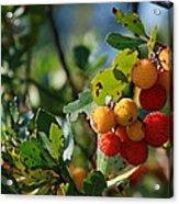 Strawberry Tree Acrylic Print