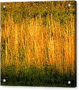 Straw Landscape Acrylic Print