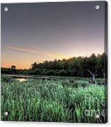 Streaky Swamp Sunrise Acrylic Print