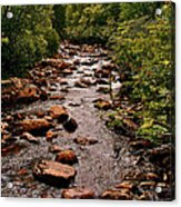 Stream Along Gros Morne Trail In Gros Morne Np-nl Acrylic Print