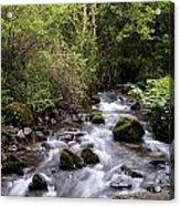 Stream At Glencar Acrylic Print