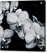 Stream Of Orchids Acrylic Print