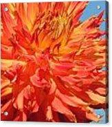 Streaming Petals Acrylic Print
