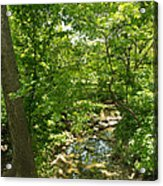 Streaming Through The Trees Acrylic Print