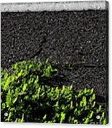 Street Growth Acrylic Print
