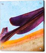 Strelitzia Abstract Acrylic Print