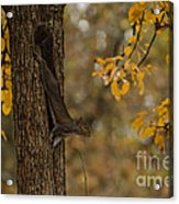Stretching Out Acrylic Print
