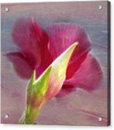 Striking Hibiscus Flower Acrylic Print