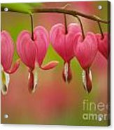String Of Hearts Acrylic Print