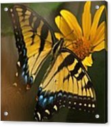 Striped Beauty Acrylic Print
