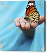 Striped Tiger Butterfly Acrylic Print by Tim Gainey
