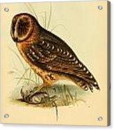 Strix Owl Acrylic Print