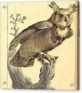 Strix Virginiana Owl Acrylic Print