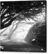 Stroll In The Fog Acrylic Print by Valeria Donaldson