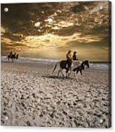 Strolling Horses Acrylic Print