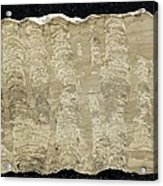 Stromatolite Acrylic Print by Science Photo Library