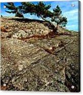 Strong Tree Acrylic Print
