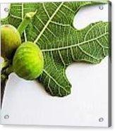 Stucked Together On Leaf Acrylic Print