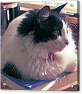 Studio Cat Acrylic Print