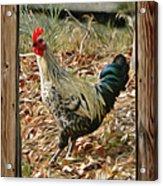 Studio Window Rooster Acrylic Print