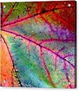 Study Of A Leaf Acrylic Print