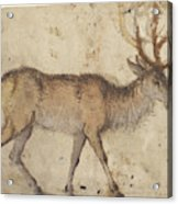 Study Of A Stag Recto,  Study Of Goats Verso Lucas Cranach Acrylic Print