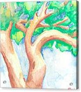 Study Of A Tree Acrylic Print
