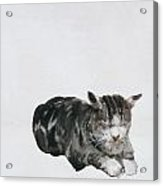 Study Of Cat Acrylic Print