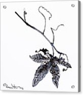 Study Of Leaf In Ink Acrylic Print