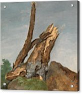 Study Of Rocks And Branches, George Augustus Wallis Acrylic Print