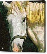 Study Of The Horse's Head Acrylic Print