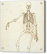 Study Of The Human Figure, Anterior View, From A Comparative Anatomical Exposition Of The Structure Acrylic Print