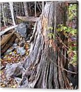 Stump Acrylic Print