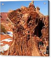 Stumped At Monument Valley Acrylic Print