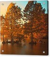 Stumpy Sunset Acrylic Print