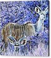 Styled Environment- Modern Kudus V3 Acrylic Print