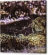 Styled Environment-the Modern Trendy Cheetah Acrylic Print