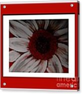 Stylized Daisy With Red Border Acrylic Print