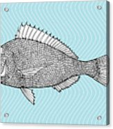 Stylized Fish. Sea Fish. Dorado. Black Acrylic Print