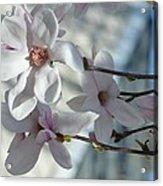 Sublime Magnolia Acrylic Print