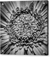 Subtle Complexity In Black And White Acrylic Print