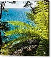 Subtropical Forest Of Abel Tasman Np In New Zealand Acrylic Print