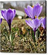 Suburban Spring Acrylic Print