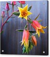 Succulent 23 Acrylic Print