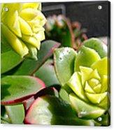 Succulent Bloom Acrylic Print