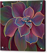 Succulent Delicacy Acrylic Print