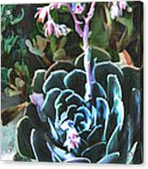 Succulent Flower Caught In A Moonbeam Acrylic Print