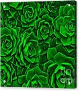 Succulent Green Acrylic Print