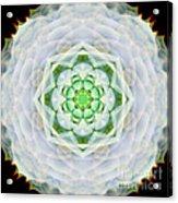 Succulent Mandala Acrylic Print